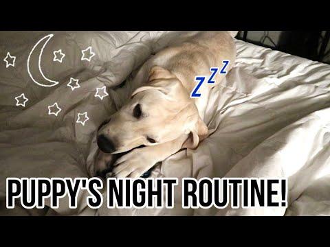 LABRADOR PUPPY'S REAL NIGHT ROUTINE!