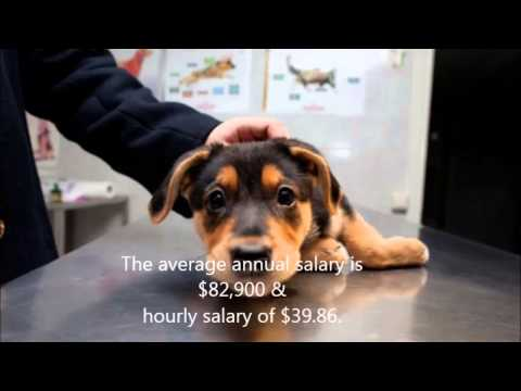 Thinking about becoming a veterinarian - YouTube