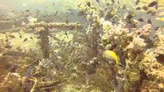 Inchcape 1 Dibba Dive الغوص بانشكيب ١ بمنطقة دبا