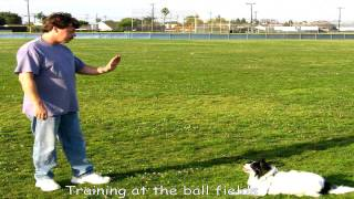 How To Train Your Dog In 3 Easy Steps?