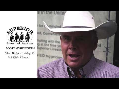Superior Livestock Auction  |   Scott Whitworth