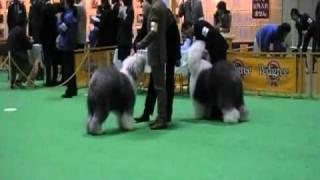 2008年12月20日 ジャパンドッグフェスティバル チャンピオンズチャンピ...