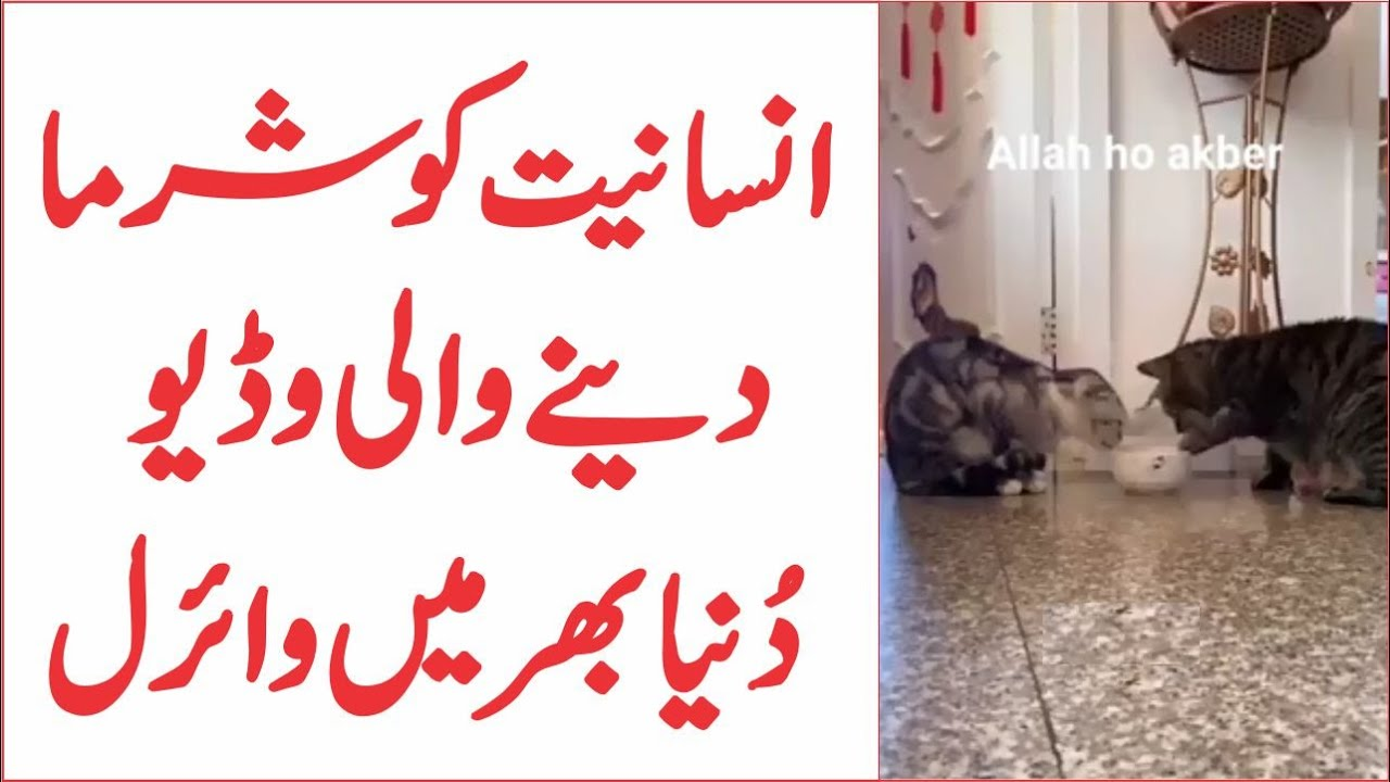Lesson Of Brotherhood And Equality From Viral Video Of Two Cats | AR Videos