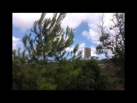 The University Of Haifa