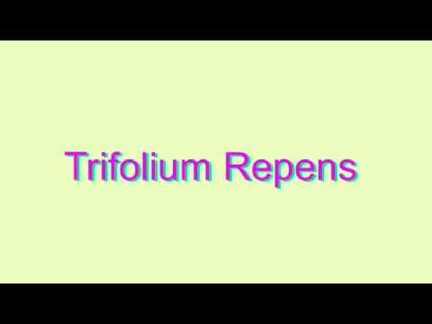 How to Pronounce Trifolium Repens