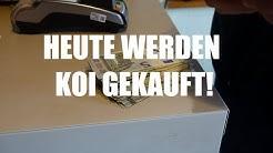 Koiteichblog [99] ★ Heute werden Koi gekauft
