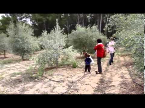 Viens rencontrer ton arbre, Jardin des Oliviers