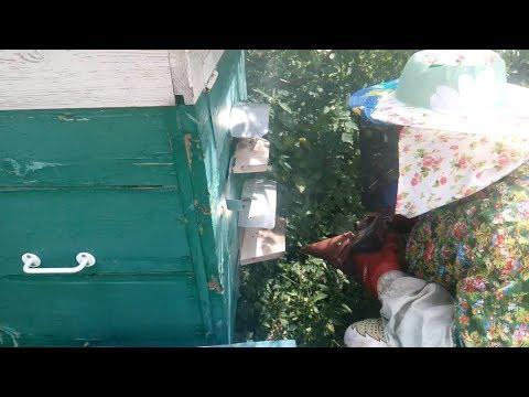 Подкормка пчел - Пчеловодство для начинающих, мёд, пчела