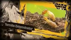 SimplyGreen Pest Control Phoenix Arizona