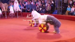 Цирк Золотой Дракон Великие Луки(, 2016-08-14T14:24:51.000Z)