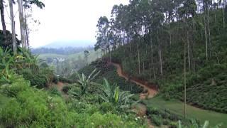 Mountain Top Green Tea Farm