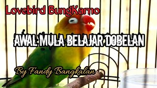 Download lagu Lovebird Jantan Dobelan Awal Konslet ngekek minor.