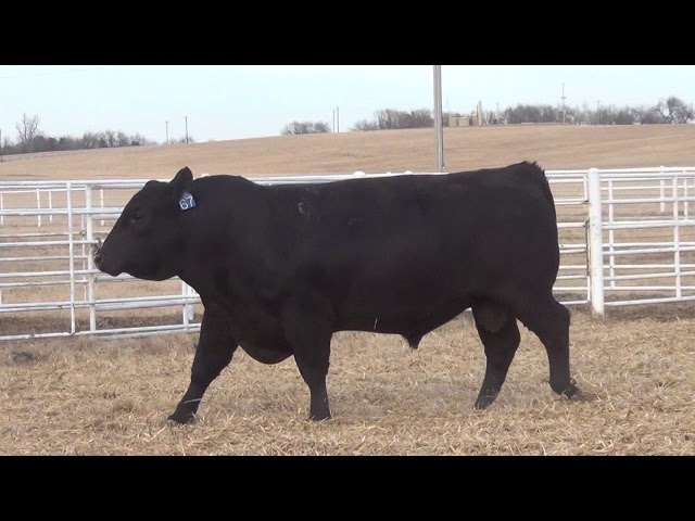 Express Ranches Lot 67