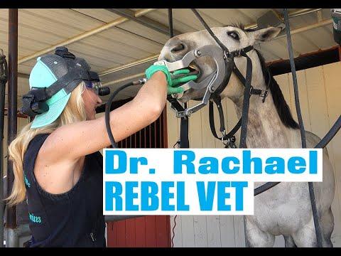 Dr. Rachael Veterinarian