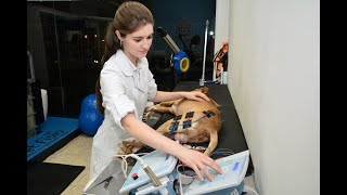 Paciente pet idoso e os benefícios da fisioterapia