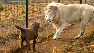 Unlikely Animal Friendships You'll See For the First Time...