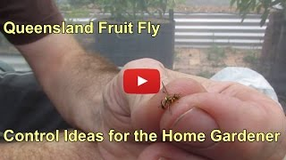 Queensland fruit fly & a few control ideas for the home gardener...