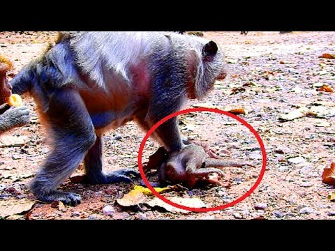 Terrify! Mum fight Timo very serious cos angry so much, Look so cruel mum, So pity on baby