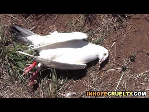 US Senator Jim Inhofe Shoots Pet Birds for Fun