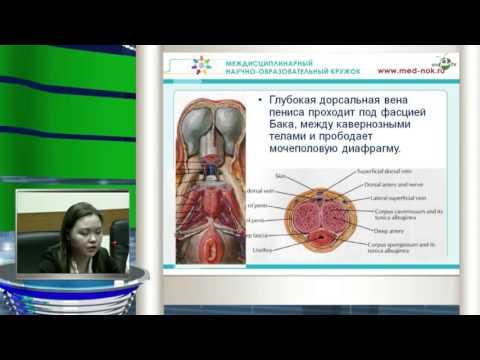 Дерягина Д М - Хирургическая анатомия простаты