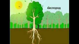 видео Минеральное питание растения