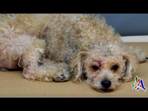 Раненую собаку выбросили в мусор - у нее обнаружилась травма головы и глубокий порез у глаза