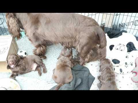 Monty & Shelly Puppies Milky Bar Kids