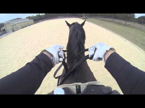 Virtual View: How To Hold & Use Double Bridle Reins