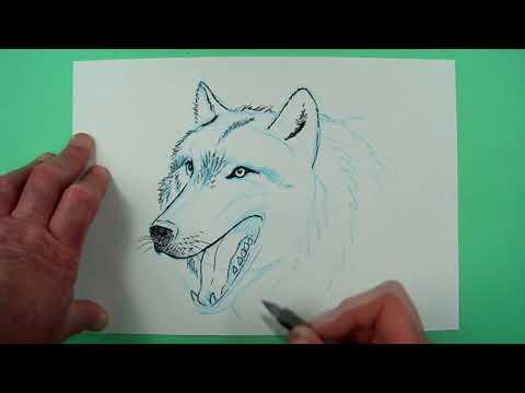 Wolf Zeichnen Lernen Einfach Schritt Fur Schritt Fur Anfanger Kinder 2