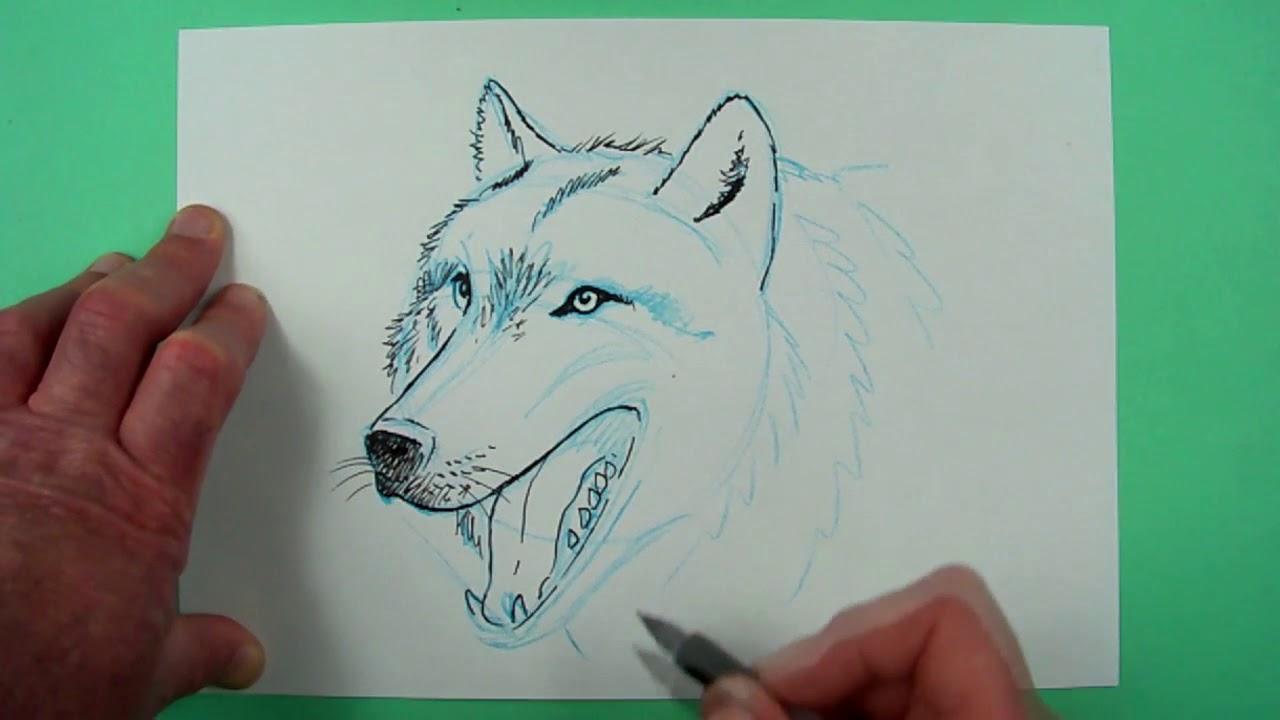 Wie Zeichnet Man Einen Wolf Zeichnen Für Kinder Und Jedem Dem Es Spaß Macht