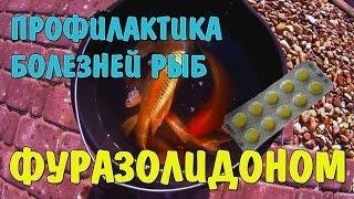 Фуразолидон для профилактики болезней рыб