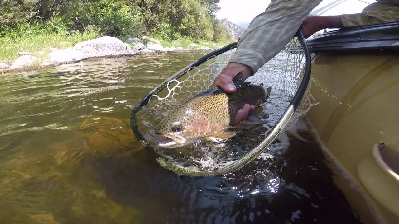 Big Hole River Fly Fishing Silver Bow Club Great Divide Outfitters