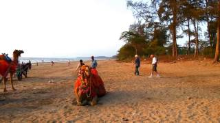 Bordi beach is located in thane district of maharashtra. the famous situated 145 km off mumbai. one best places to go, if you ...