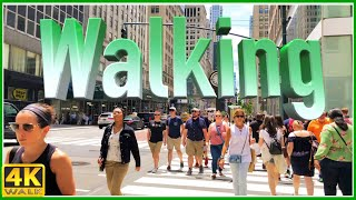 【4K】WALK : REALITY SHOW while walking