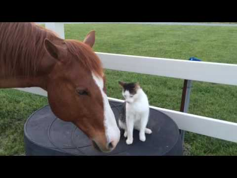 Cat and Horse are Best Buds