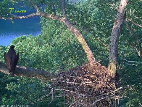 Dale Hollow Eagle Cam Cam 2 - No sound