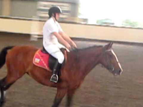 Horseridingforlife RAW CLIPS