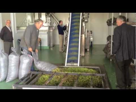 Greek Olive Oil Press (Maritsas), Peloponnesos