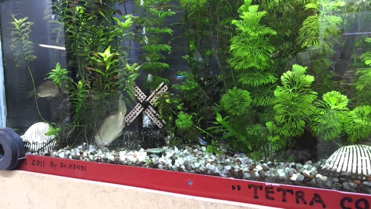 Indahnya Aquarium air tawar dalam dindingaquarium