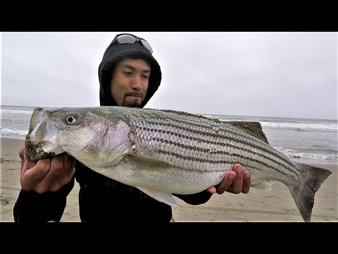 The Most EPIC Striped Bass Surf Session! Live Anchovies Washed On Shore!!