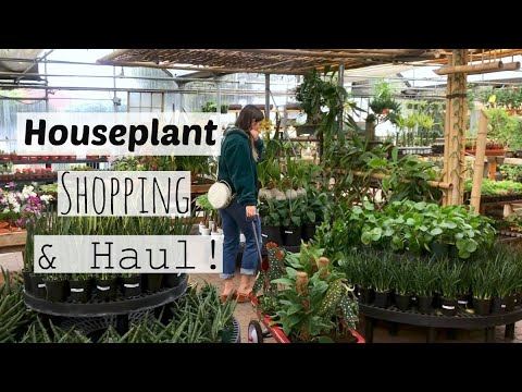 Houseplant Shopping At The Best Plant Nursery! | Cactus & Tropicals Indoor Plant Haul!