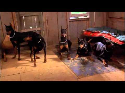 5 dobermann d'oro film