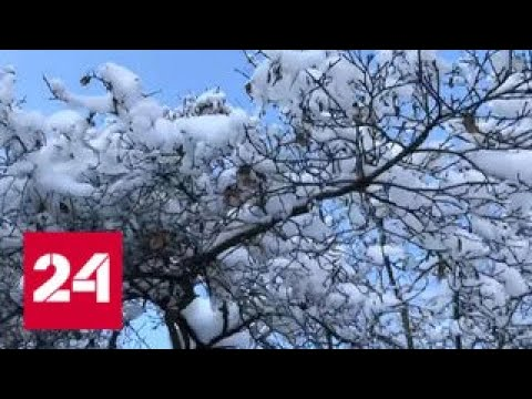 """""""Погода 24"""": итоги недели: минус 30 в Подмосковье, и это не предел - Россия 24"""