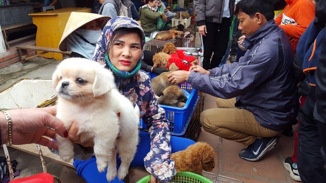 Chợ bán chó mèo cảnh thú cưng rẻ nhất Việt Nam mới nhất