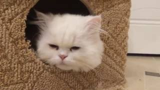Кошачий домик своими руками 2