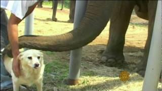 True Friends Never Forget...Especially Elephants