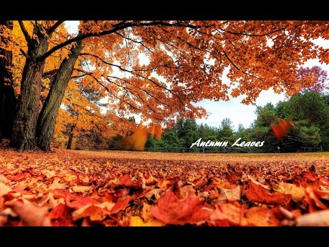 Autumn Leaves (Santana Version)