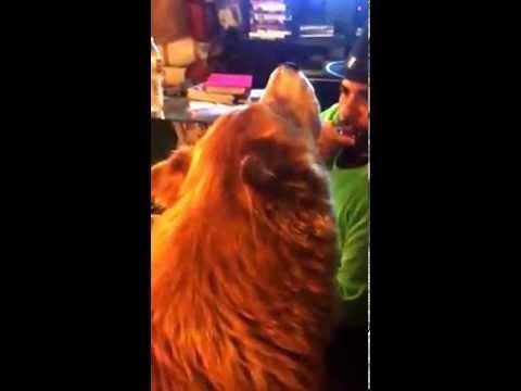 Harmonica harmonica tabs mario : Mario Mónico playing harmonica and Ozzy howling :) - YouTube