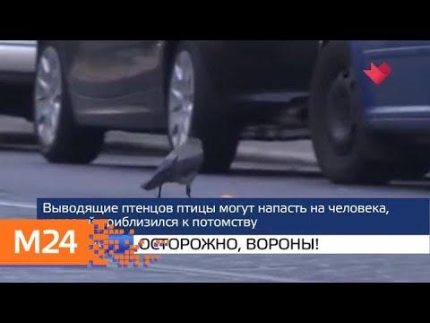 """""""Москва и мир"""": """"осторожно, вороны"""" и указания Центробанка - Москва 24"""