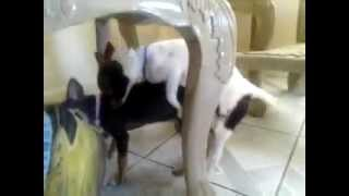 My two girl dogs♥ doing it..........im ashamed